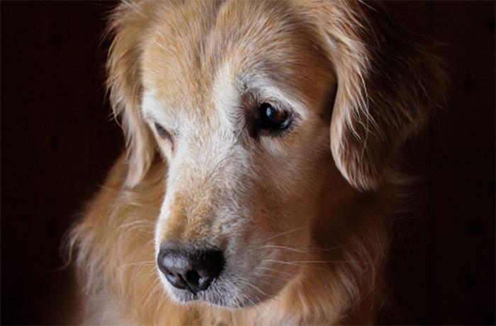 glucosamine_dog_01