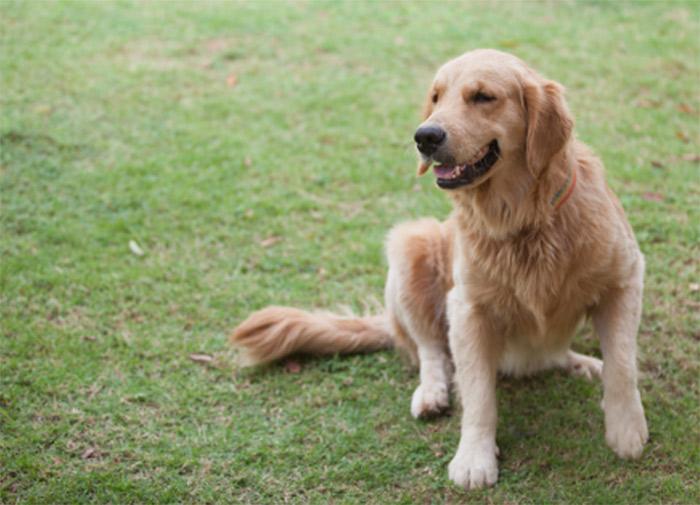 glucosamine_dog_02