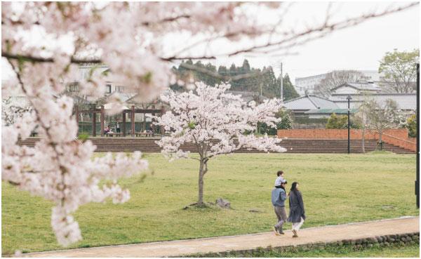桜の中を家族が歩いている
